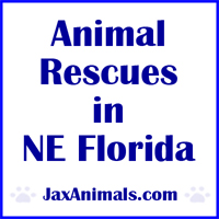 Animal Rescues in Jacksonville and North Florida