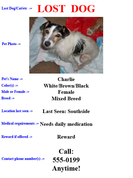 Lost and Missing Pet Jacksonville and North Florida – Lost Dog Flyer Examples