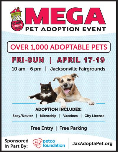 Small Dog Adoptions Jacksonville Florida