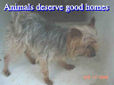 Animals Deserve Good Homes